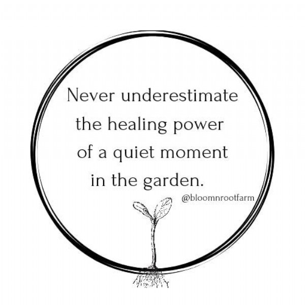 Photo by Bloom 'N Root Farm on June 10, 2021. May be an image of flower and text that says 'Never underestimate the healing power of a quiet moment in the garden. @bloomnrootfarm'.