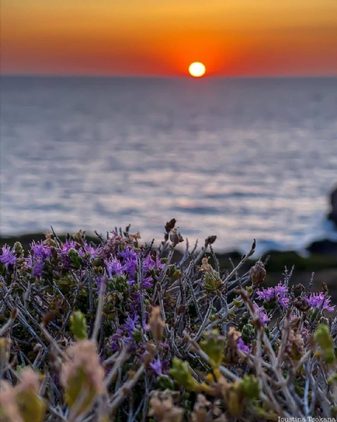 Photo by SUNSET   mypassion in Kefalonia, Greece with @ioustina_tsokana, @sunsetmypassion, and @mypassion_group. May be an image of flower and nature.