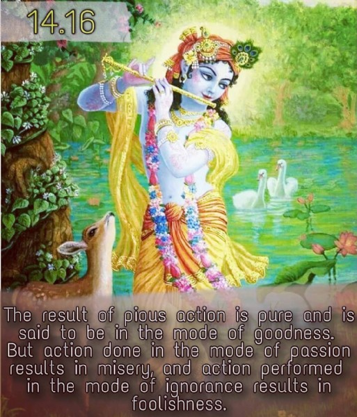Photo by krishna on June 10, 2021. May be an image of 1 person and text that says '14.16 The result of pious action is pure and is said to be in the mode of goodness. But action done in the mode of passion results in misery, and action performed in the mode of ignorance results foolishness.'.