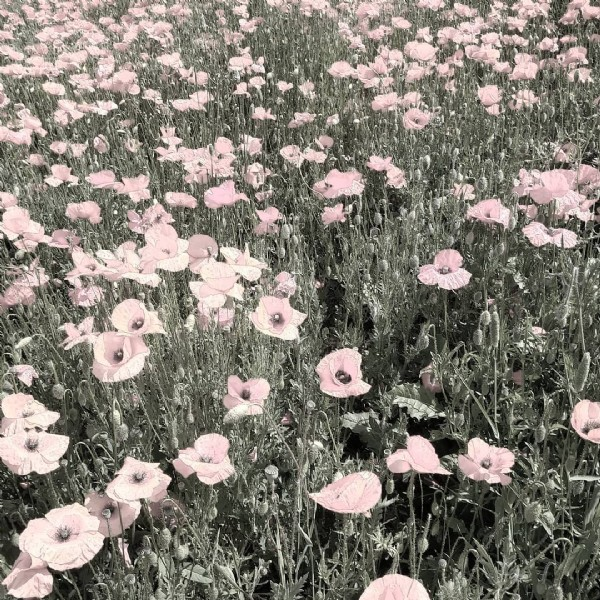 Photo by Lorenzo Pierpaoli in Senigallia, Italy. May be an image of flower and nature.