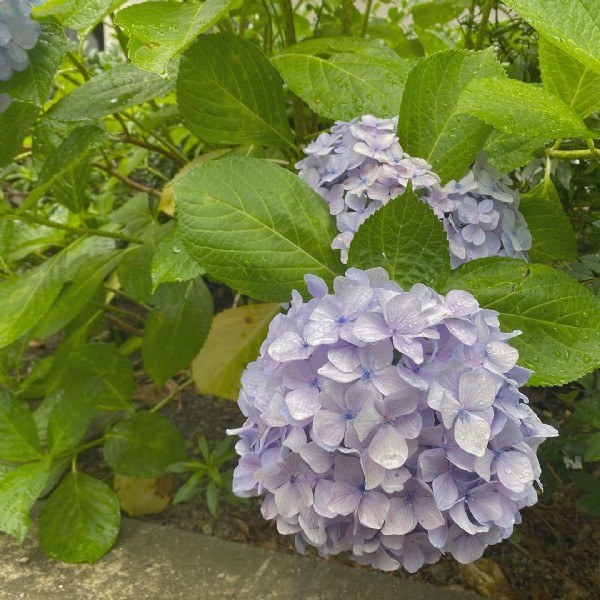 Photo by hikari on June 17, 2021. May be an image of flower and outdoors.