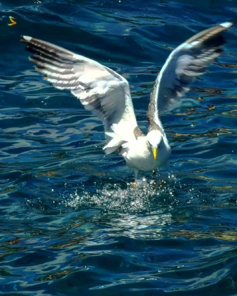 Photo by Y N M in Puerto de Mogán. May be an image of sea bird, nature and body of water.