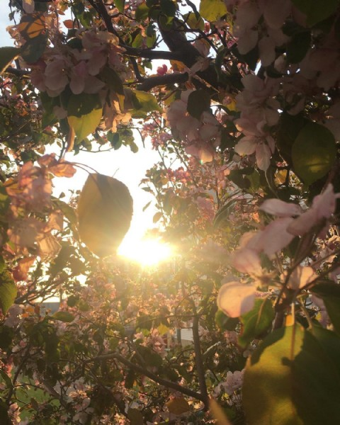 Photo by Liv  on June 10, 2021. May be an image of flower, tree and nature.