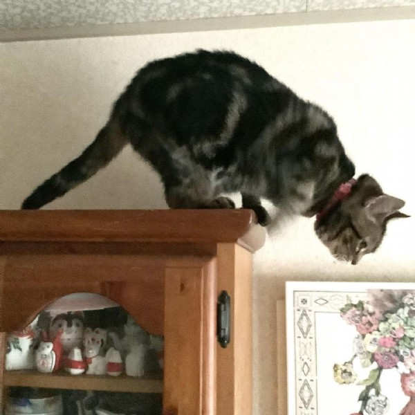 Photo by 料理研究家/森 洋子/猫森キッチン/ちび猫クッキング on June 10, 2021. May be an image of cat and indoor.