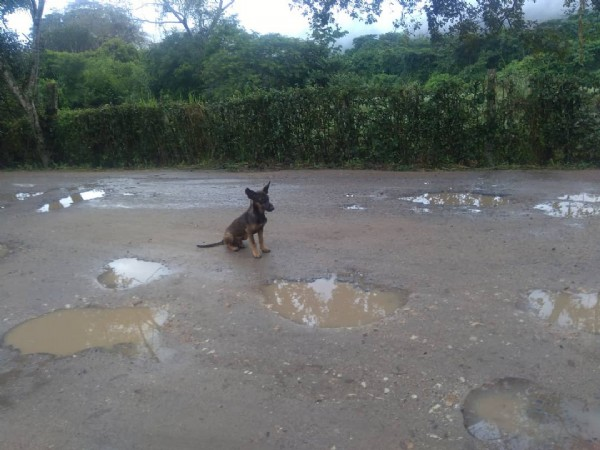 Photo by Santiago Orjuela on June 07, 2021. May be an image of dog and outdoors.