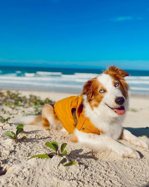Photo by Duna, a doguinha praieira! in Florianópolis, Santa Catarina with @paccostore_. May be an image of dog and beach.