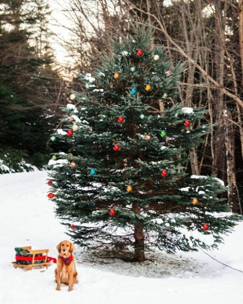 Photo by christmas atmosphere on August 02, 2021. May be an image of christmas tree and outdoors.