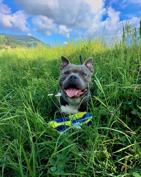 Photo by Queen Nayla in Rorschach, St. Gallen. May be an image of dog and grass.