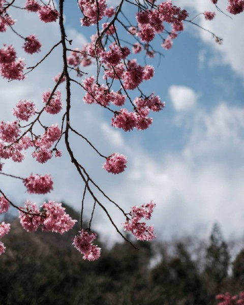 Photo by PomiPhoto on March 05, 2021. May be an image of 1 person, flower, tree and nature.