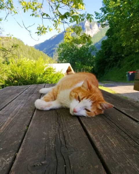 Photo by -- .  on June 23, 2021. May be an image of cat and outdoors.