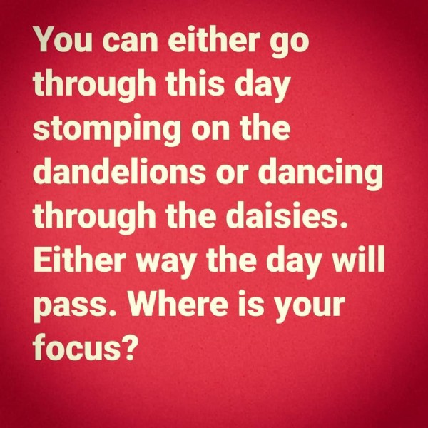 Photo by Rebecca Stein-Levet on June 07, 2021. May be an image of text that says 'You can either go through this day stomping on the dandelions or dancing through the daisies. Either way the day will pass. Where is your focus?'.