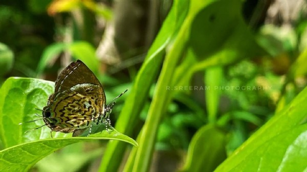 Photo by Sreeram Kovoor on July 31, 2021. May be a closeup of nature.
