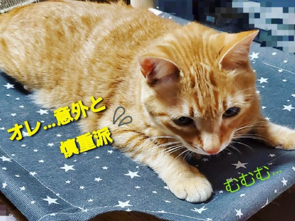 Photo shared by みさちぃ on July 30, 2021 tagging @daiso_official. May be an image of cat and text.