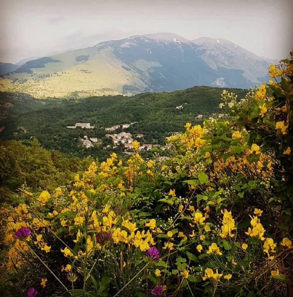 Photo by Hotel Panorama San Valentino on June 11, 2021. May be an image of flower and nature.