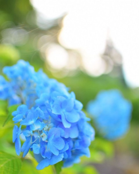 Photo by aye* in Daisen, Akita. May be a closeup of flower and outdoors.