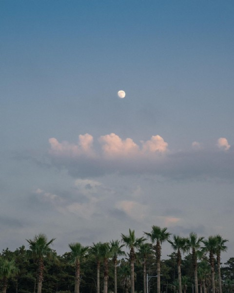 Photo by 김대성 in 금능해수욕장. May be an image of nature, twilight, palm trees and sky.
