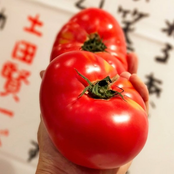 Photo by 八百屋ななつぼし on June 18, 2021. May be an image of tomato and indoor.